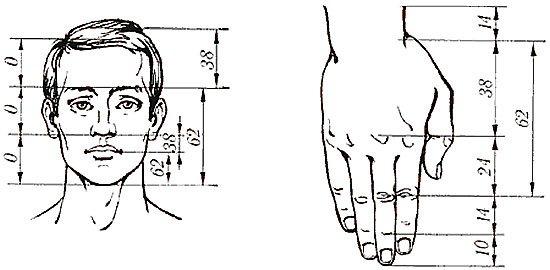 Соотношения последовательности Фибоначчи в пропорциях человеческого тела.